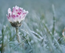 Зима близко: Беларуси обещают первые ночные заморозки