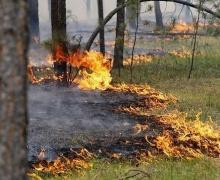 запрет непосещени лесов, Беларусь, Минлесхоз