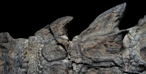 мумия динозавра
