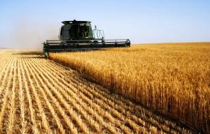 Белорусское сельское хозяйство
