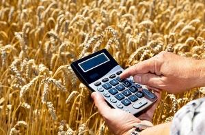 калькулятор и пшеничное поле