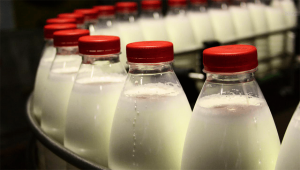 Единого рынка не вышло: РФ не хочет пускать к себе белорусскую «молочку»