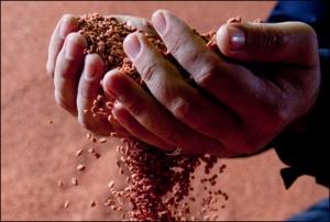 Беларусь, калийные удобрения, ставки, БКК, Беларуськалий, выгодные пошлины на хлорками