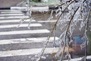 ветка во льду и переход