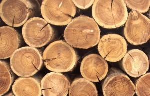 Румас, деревообработка, холдинг, Беларусь