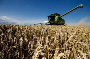 правительство, досудебное оздоровление, банкротство, сельхозпредприятия, сельхоз, отрасль, убытки, Беларусь