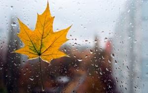 кленовый лист на стекле