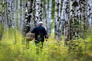 в лесу грибник