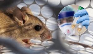 В Китай пришел хантавирус, умер пока один человек